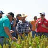 During a 2016 field day, Jimmy Emmons (center) and Keith Berns of Green Cover Seeds stand among milo plants as they talk about pollinator strips seeded on Emmons' farm near Leedey, Okla.